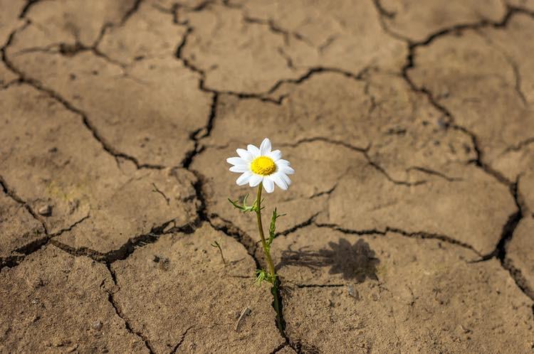 imagen portada Taller sobre resiliencia